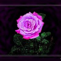А Вы когда-нибудь слышали, как звучат розы? :: Людмила Богданова (Скачко)