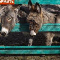 Зоопарк :: Виктор Киселев