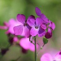 Цветочный хоровод-221. :: Руслан Грицунь