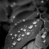 После дождя :: Евгения Каравашкина