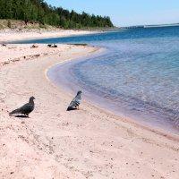 Голуби тоже хотят на море..... :: Наталия Алексеевна