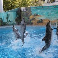 танец дельфинов :: Валентина Боровкова