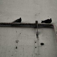 Неудобная плоскость :: Катерина Чебышева
