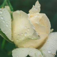 after rain (1) :: Ирина Шарафутдинова