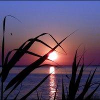 Восход на озере :: Ольга Голубева