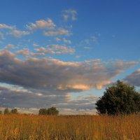 Радостно утро цветистого лета Новому дню посылает приветы. :: Павлова Татьяна Павлова