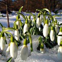 Пришла весна :: Seva-stopol (Севастьян)