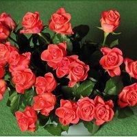 Охапка роз :: Лидия (naum.lidiya)