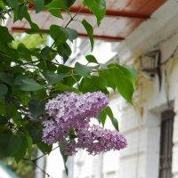 Городские цветы :: Галина