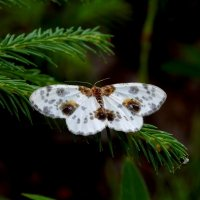 Бабочка в лесу :: Татьяна Н.