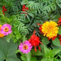 Краски лета... :: Тамара (st.tamara)