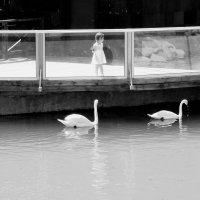 """""""Три Лебедя"""" :: maRIAam ahaRONYyan"""