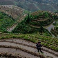 Труд на рисовых террасах в Китае :: Андрей Лукашенко