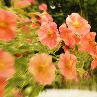 «Фестиваль Moscow Flower Show» в парке искусств «Музеон». :: Арина Дмитриева