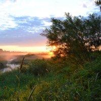 Утро :: Наталья Левина