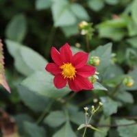 Цветочный хоровод-233. :: Руслан Грицунь