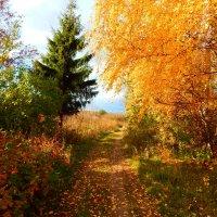 Осенний день :: Наталья