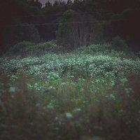 Травы, травы :: Валентина Ломакина