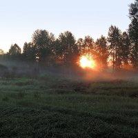 Солнечный свет летнего утра :: Павлова Татьяна Павлова