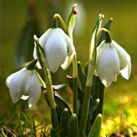 Весенний букет :: Seva-stopol (Севастьян)