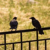 Птицы летом :: Aнна Зарубина