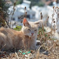 Священное животное Кипра :: Елена ***