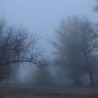 Ежик в тумане :: Владимир Николаевич