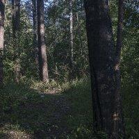 В лесу. :: Яков Реймер