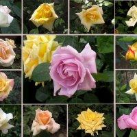 Венок из роз :: Нина Бутко