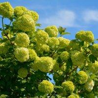 Весны цветенье... (этюд 5) :: Константин Жирнов