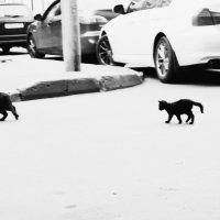 Чёрный прайд :: Анастасия Ковайкина