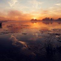 Туманный рассвет на реке Дубна. :: Дмитрий Постников
