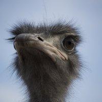 bird :: Denis Vasiliev