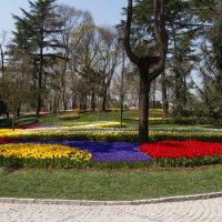 Фестиваль тюльпанов в парке Эмирган :: Марат Рысбеков