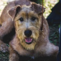 Пёс :: Анастасия Звягина