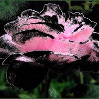 Розовые страсти :: Нина Корешкова