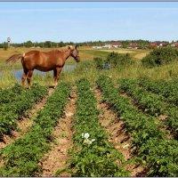 Пейзаж с лошадью. :: Роланд Дубровский