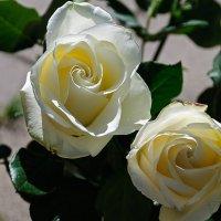 как хороши, как свежи были розы 3 :: Galina