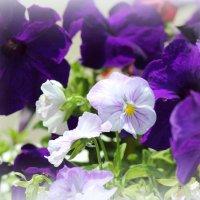 Краски лета :: Marina K