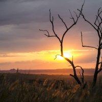 Вечернее солнце :: catonbox