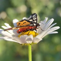Бабочка :: Татьяна Кошкина