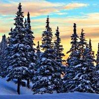 Зимний пейзаж :: Владимир Пугачёв