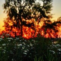На закате дня :: sergej-smv