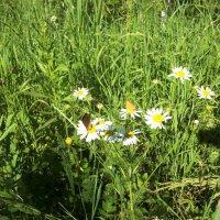 Бабочки :: Анна Наумова