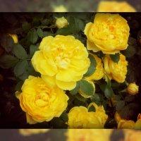 Желтое настроение :: Златислава Злобина