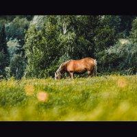 Лошадь :: Aleksandr Tishkov
