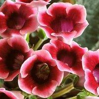 Цветы на окне :: Владимир Пугачёв