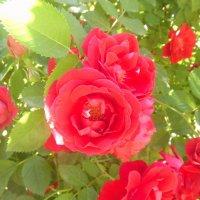 Цветочный хоровод-259. :: Руслан Грицунь