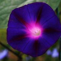 Яркий цветок :: Damir Si