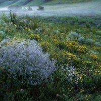 Утро.Туман над травами :: Сергей Корнев